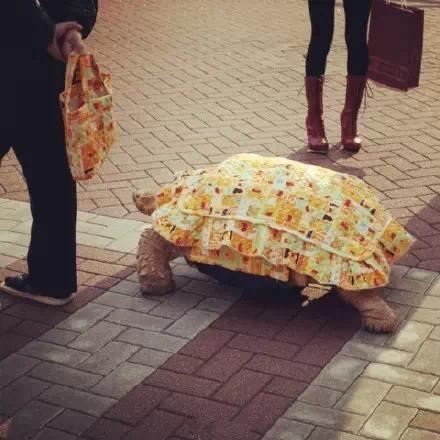 老爷爷每次出去溜宠物都花很长时间,一只乌龟拖后腿啊