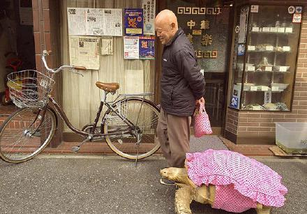 一只乌龟被老爷爷收养,相依为伴,乌龟越长越大,... _网易视频