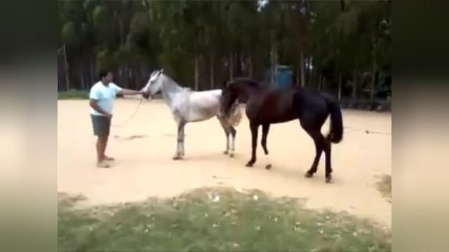蕾冠王黑马白马