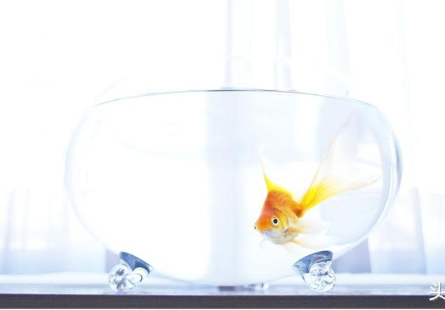 石头景草缸欣赏,鱼缸中层峦跌幅的壮观景象,水族箱就该这么霸气