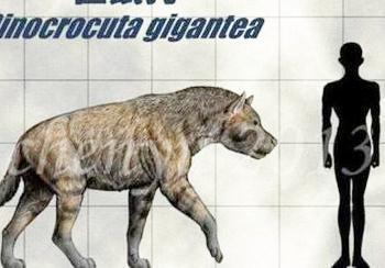 羚羊被鬣狗掏