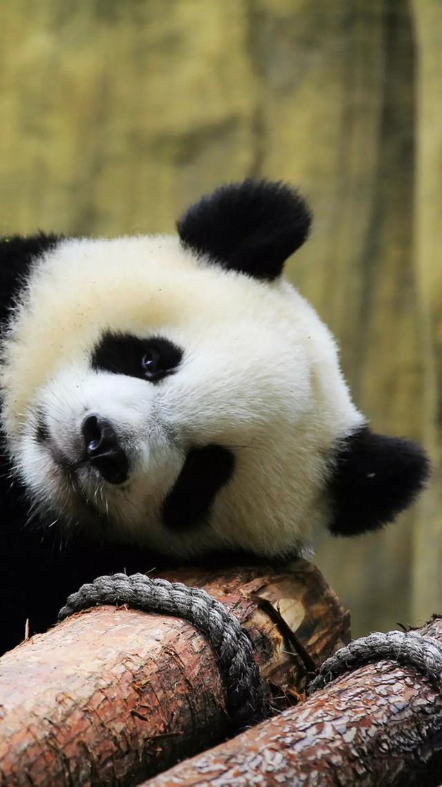 什么地方可以买到新的熊猫GM800手机