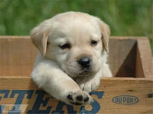 今天是狗年大年初三,分享12张可爱的狗狗照片,祝你狗年兴旺发达