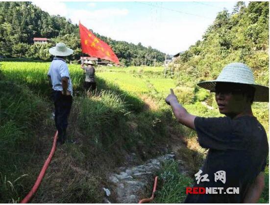 新晃县禾滩镇党员干部、计生协会会员战斗在抗旱一线