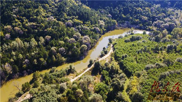 河南济源:近日九里沟原大寨红外相机拍到多种野生动物