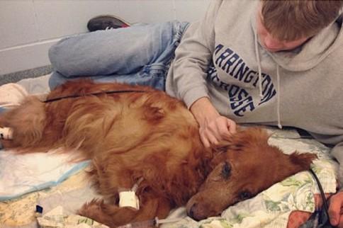 图看即将去世的老狗:主人如同失去亲人般痛苦