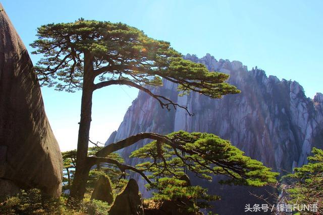 黄山仙桃石图片