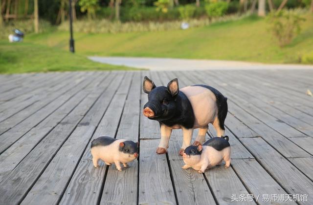 属猪人的性格_十二生肖