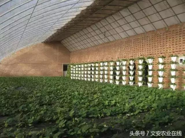这么多种日光温室,您最喜欢哪一个?(多图)