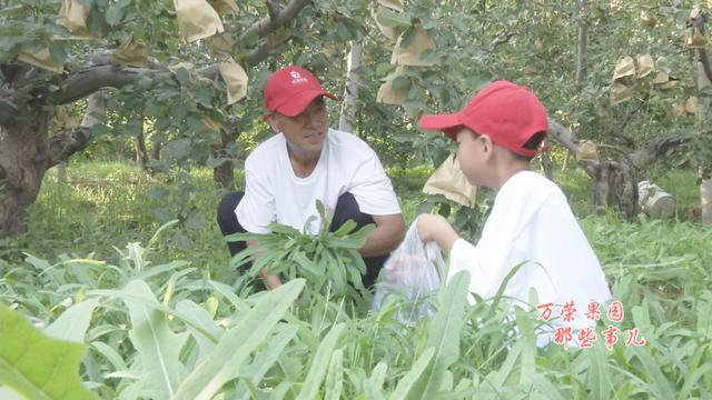 农村地里难铲除的一种杂草,也是营养丰富的野菜