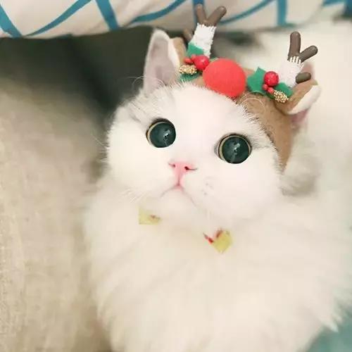 好久没看到这么萌的猫咪了!60张超可爱猫咪画!