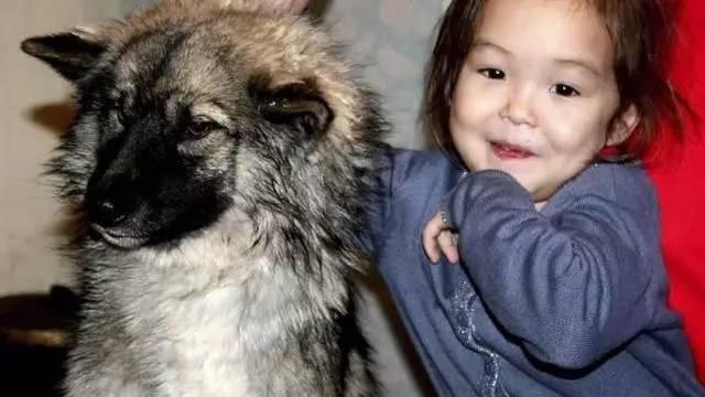 俄罗斯3岁女孩和宠物狗失踪,3周后狗狗咬着女孩... _手机搜狐网