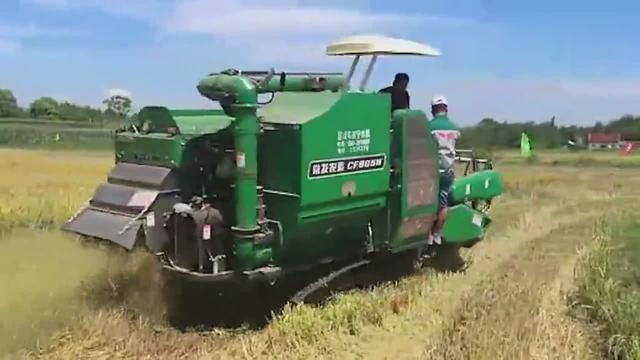 小型履带式收割机收稻谷,烂泥田也不怕,非常适合山区小块农田