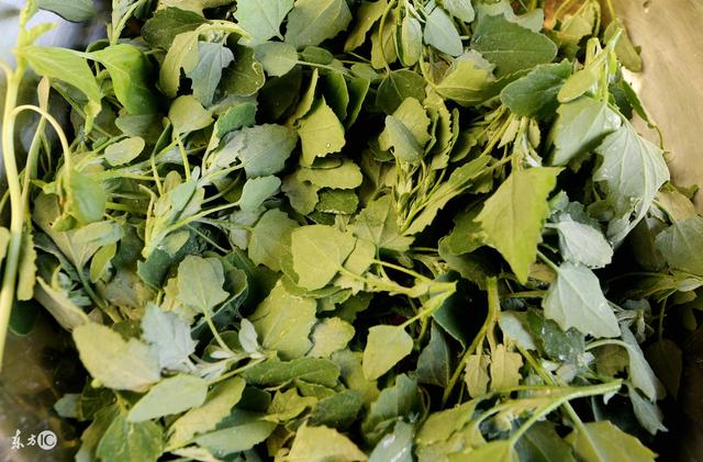 不能吃的灰菜图片 有毒灰菜与灰菜的区别 - 爱秀美