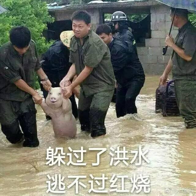 洪水救猪表情包