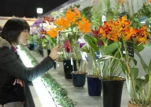 阳春三月,阜阳生态园一大波活动来袭!