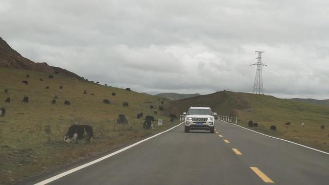 行驶的汽车上实拍四川若尔盖大草原