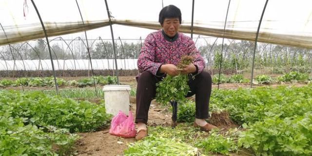 大棚蔬菜种植投资成本及利润分析