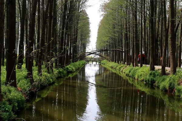江苏小九寨沟—泰州兴化李中水上森林公园