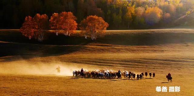 草原奔馬動態圖片