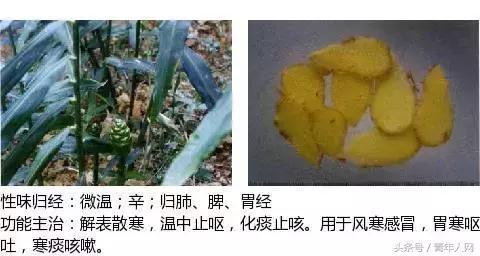 草药百花草的图片
