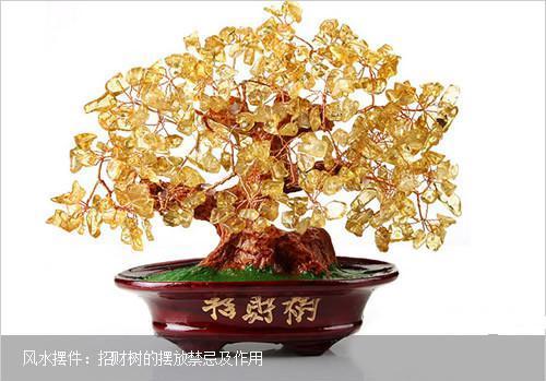 发财树怎么摆放招财,放财位和大门对角位都能带来财运_植物之家