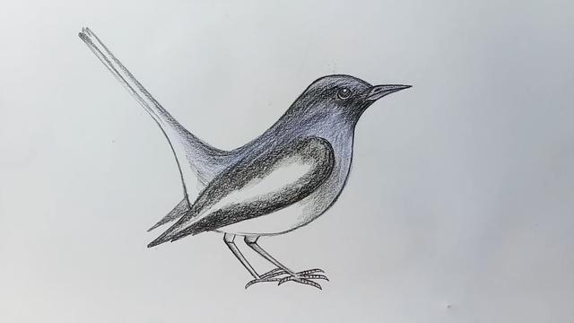 简易画鸟类的步骤 画鸟类的简笔画图片 - 聚巧网