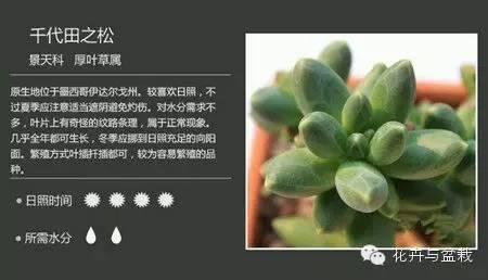 多肉植物图片及名称大全_多肉植物萌_新浪博客