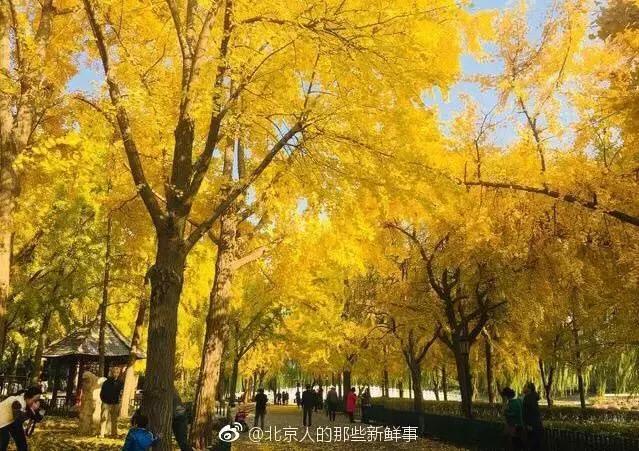 北京景点图片大全图片
