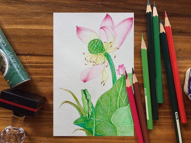 教你画荷花的彩铅画绘画步骤教程 - 5068儿童网