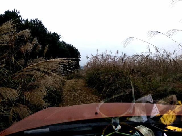 农村小哥的父亲摔伤了,于是他上山找一种叫散血莲的草药给父亲喝