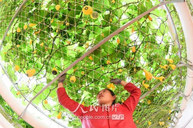 2017小雪节气图片 小雪朋友圈祝福语图片大全-西西手机站