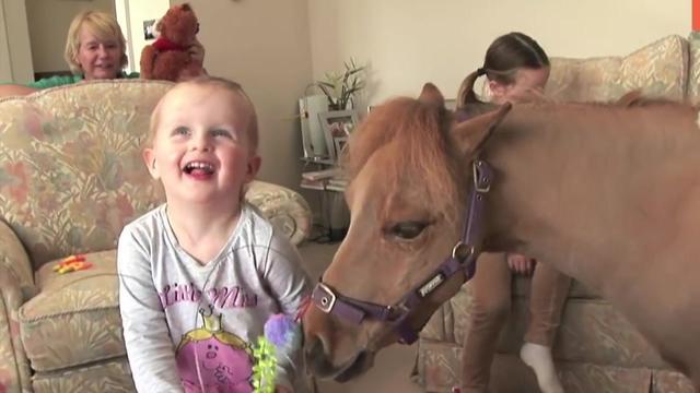 宠物小矮马-宠物小矮马批发、促销价格、产地货源 - 阿里巴巴