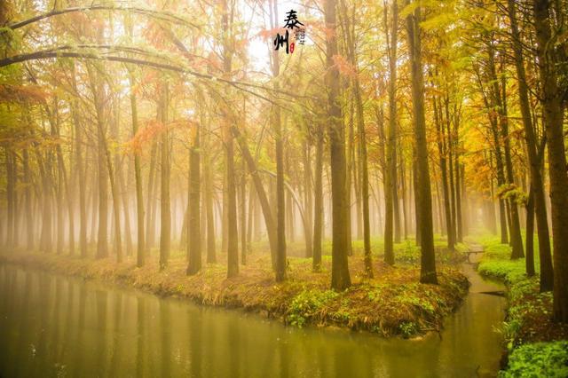 江苏 泰州兴化李中水上森林公园门票(凭姓名+电话取票) - 马蜂窝
