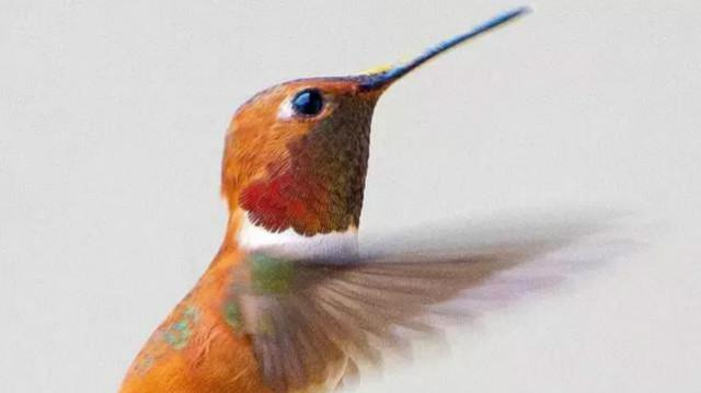 蜂鸟朝阳公园外拍美女