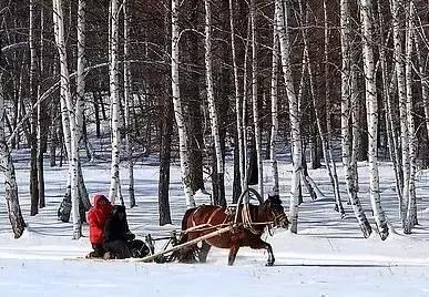 """哈尔滨冰雪大世界辟谣: 网传""""狗拉爬犁被累死""""是谣... _贵阳网"""