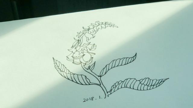 漂亮花边边框简笔画