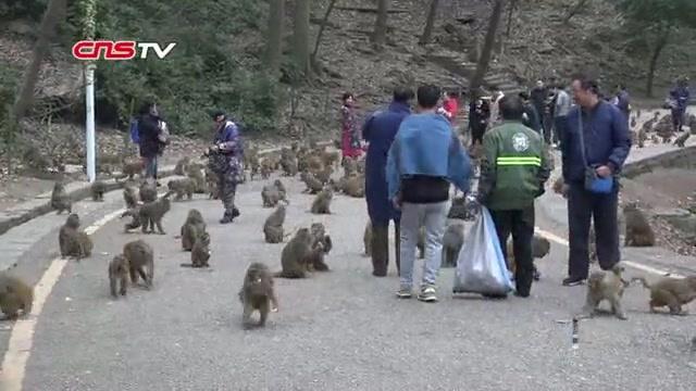 黔灵山公园猴子图片