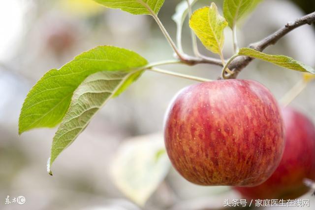 经常吃苹果对身体有什么危害呢