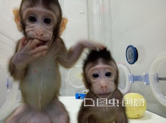 """克隆人体胚胎细胞引起恐慌 全球反对""""克隆人""""_大众... _新浪网"""
