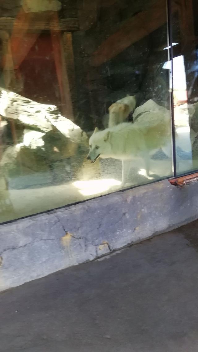 杭州野生动物园门票价格