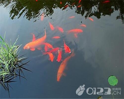 孕妇梦见好多鱼是什么意思 孕妇梦见好多鱼解析-帝神算命网手机版