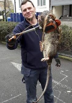 智商超群的非洲巨鼠,会看病会扫雷,每年能拯救上万人!