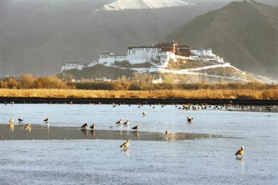 青海湖图片风景