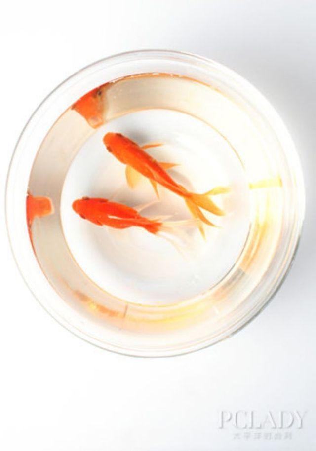 家养金鱼常见病的病因及治疗方法_品略