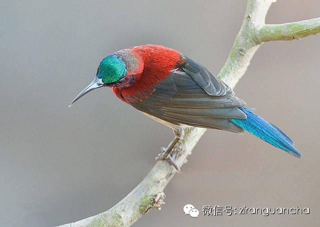 东北常见鸟类大全鸟名
