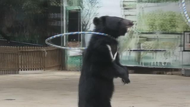 光头强和熊大熊二图片-QQ头像图片大全
