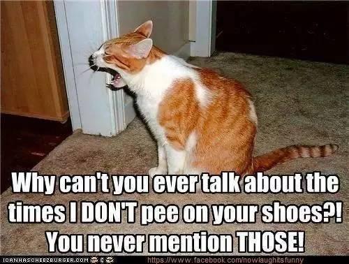 猫奴必修课!猫咪的十大常见疾病