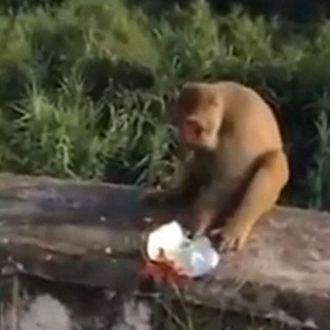 猴子吃零食手被炸,男子见状放声大笑