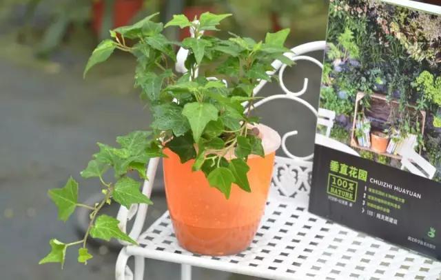 9种净化空气最佳植物排名,你家养了哪几种?